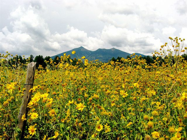 Flagstaff Wildflowers by kempix (Photo) | Weather Underground