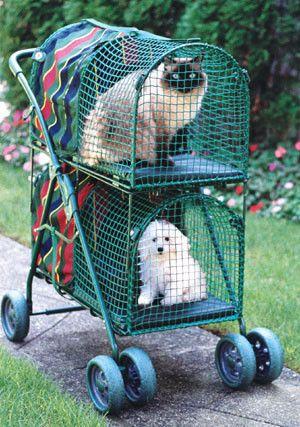 Kittywalk® Double Decker Stroller | Pet stroller, Cat ...