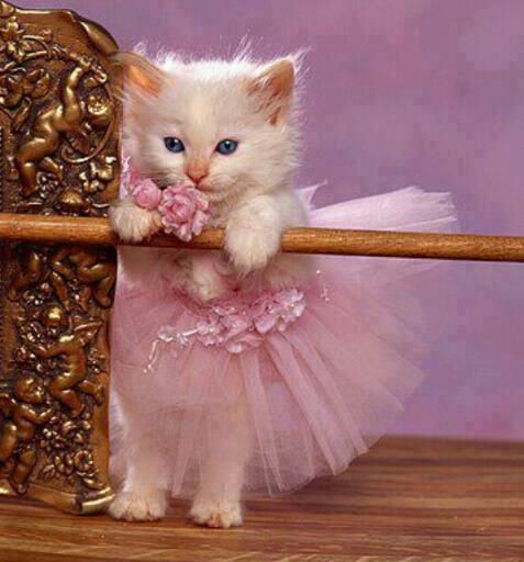 Tiny Dancer - I'm usually not a fan of pets in clothes, but this is cute, and the kitty doesn't look too traumatized. ;)