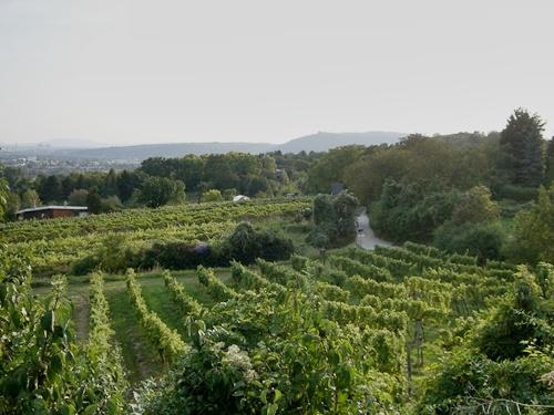 Stebersdorfer Weingärten, Bisamberg, Wien