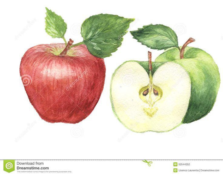 Акварель картины акварели яблока - Скачивайте Из Более Чем 37 Миллионов Стоковых Фото, Изображений и Иллюстраций высокого качества. изображение: 52544352