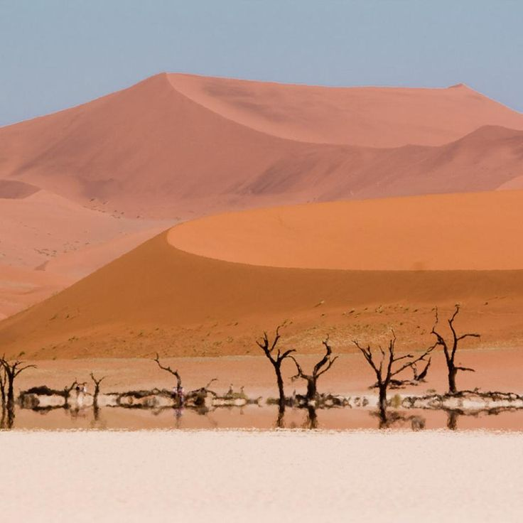 The Scorched Tree Skeletons of the Namib Desert in Namibia