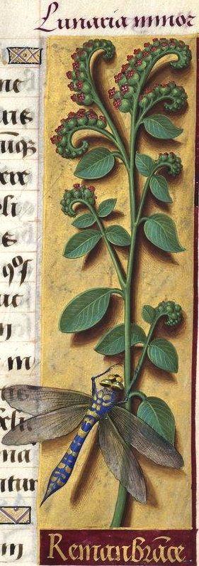 -- Grandes Heures d'Anne de Bretagne, BNF, Ms Latin 9474, 1503-1508, f°110r