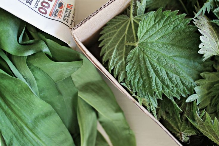 Nettle (Urtica) leaf combines diuretic effects with ability to decrease appetite. Besides, nettle is known for detox effects, normalizing metabolism and thus reducing body weight.