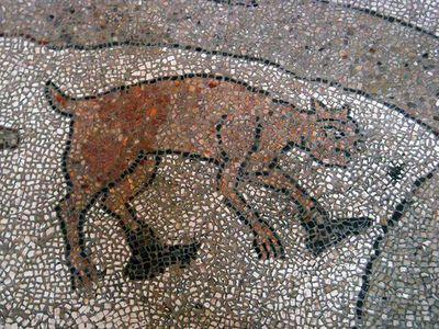 Il gatto calzato - Mosaico della cattedrale di Otranto (LE)