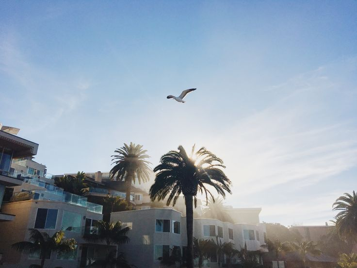 From glittering beaches to coffee and doughnuts, this Southern Californian capital is worth a visit in its own right.