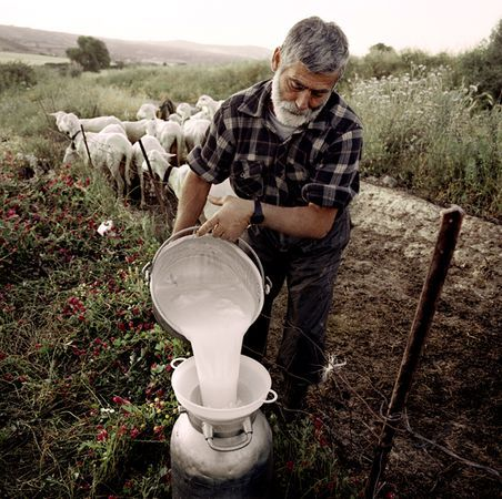 Sardynia- miejscowy sekret długowieczności to mleko owcze i robiony  z niego ser Pecorino, bogaty w kwasy omega-3 oraz mleko kozie- którego składniki działają przeciwzapalnie, chroniąc przed chorobami serca oraz chorobą Alzheimera.