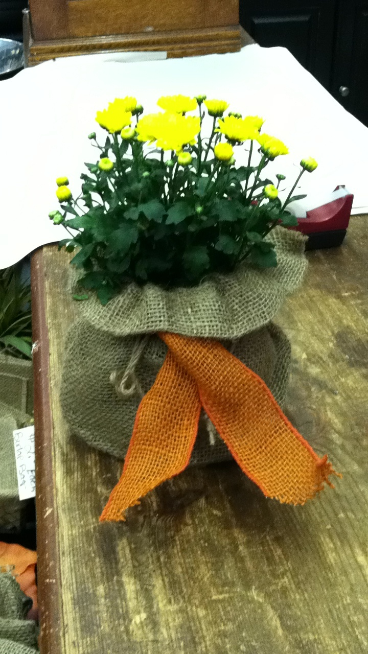 Mums in burlap bag & burlap ribbon! Great centerpiece & cheap! Riverside Antiques 615-591-4089