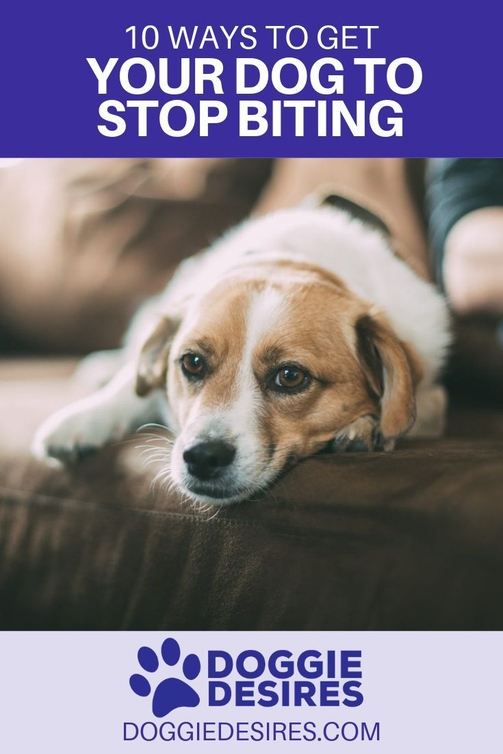 10 Ways To Get Your Dog To Stop Biting Dog Training Positive