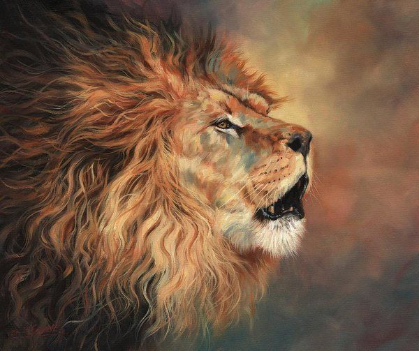 Lion Roar Profile Art Print By David Stribbling Lion Painting Lion Lion Art