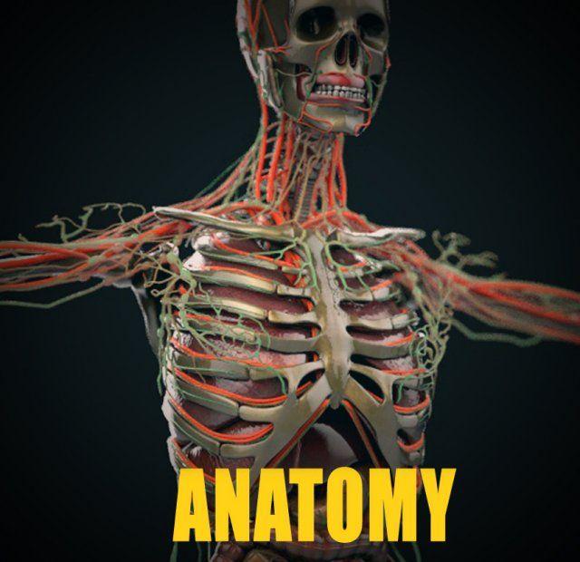 Human anatomy COMPLETE 3D Model .max .c4d .obj .3ds .fbx .lwo .stl @3DExport.com by leandroacosta
