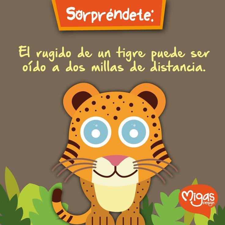 Sorpréndete… #DatosCuriosos #MigasDesign