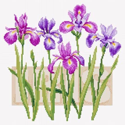 Beautiful irises (FREE CHART)