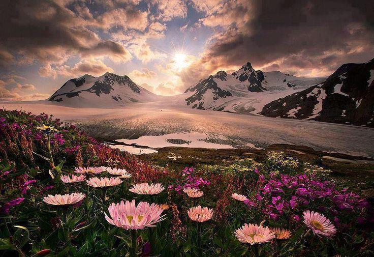 Lever du soleil sur les fleurs sauvages de l'Alaska,États-Unis