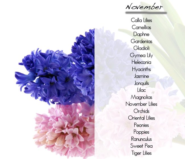 Wedding Flowers in Season November | What flowers are in season, november