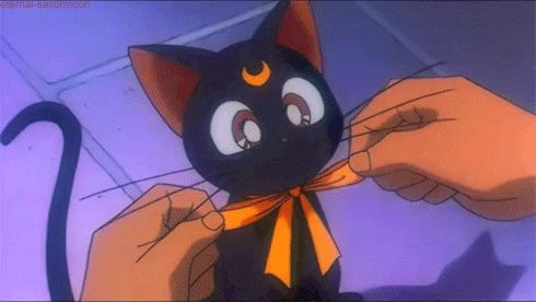 You're a huge cat fan.   Community Post: 25 Signs You Are Actually Sailor Moon In Real Life