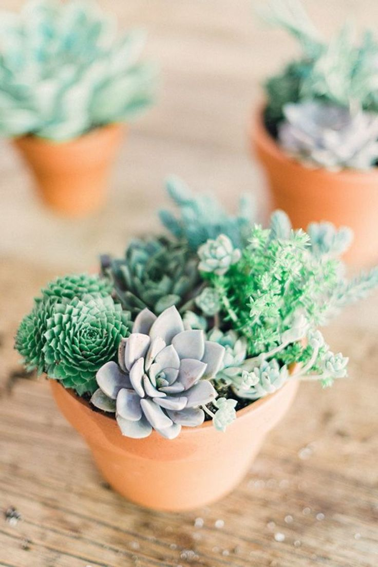 Sweet hostess gifts- DIY succulent arrangements for the home