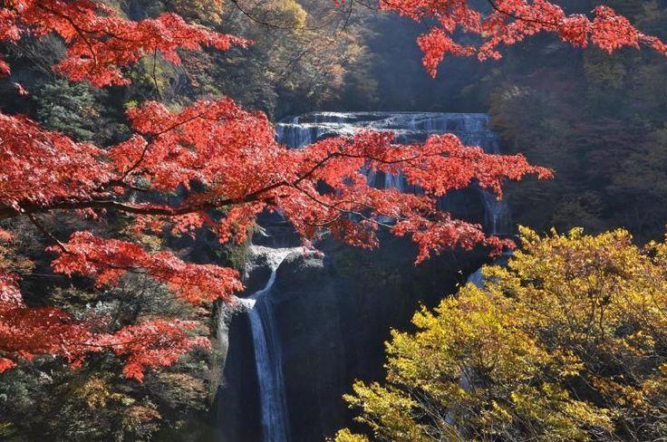 「袋田の滝」は、ただまっすぐ一本の水柱になるわけではなく、枝分かれしている面白い景観をもった滝です。冬は「氷瀑」と呼ばれる、滝が凍結する現象が発生することがありなんとも幻想的な姿を見せてくれます。西行に「この滝は四季に一度ずつ来てみなければ真の風趣は味わえない」と言わしめたように、季節を問わず魅力的な滝です。