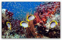 Самые популярные аквариумные рыбки Аквариумные рыбки – очень специфический вид домашних животных. В отличие от кошек и собак, они не способны подстраиваться под среду обитания хозяина, и их заводчику требуется гораздо больше времени и сил на подготовку места содержания и изучения вопроса разведения. http://c.cpl1.ru/7kNM