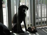 36 best autoslide images on pinterest sliding doors home ideas does your dog need a new automatic pet door do it yourself in less than solutioingenieria Gallery
