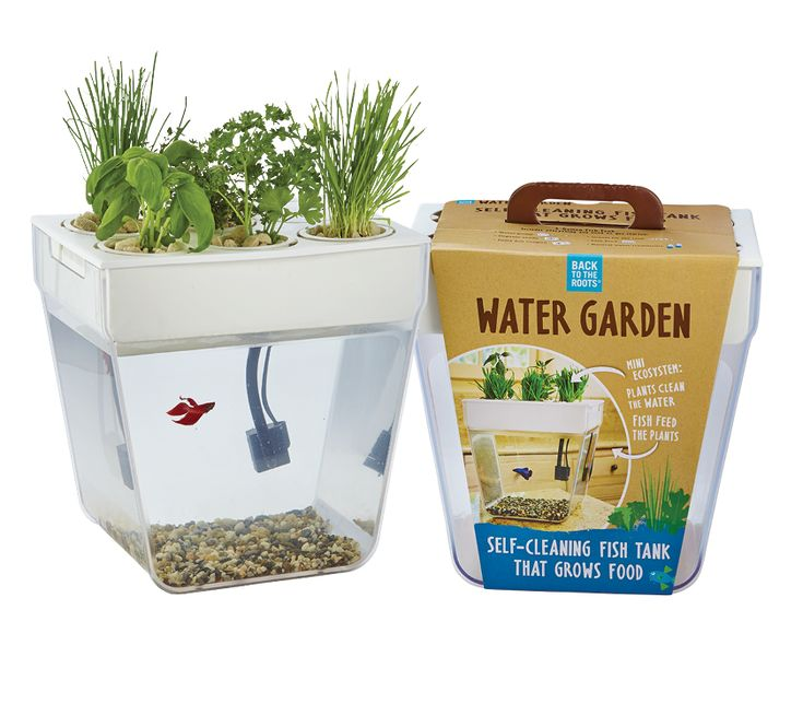 Water garden 2 0 gardens tomato seeds and gift sets for Water garden fish tank