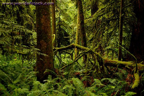 Cathedral Grove - Port Alberni, BC -- this rainforest is amazing!