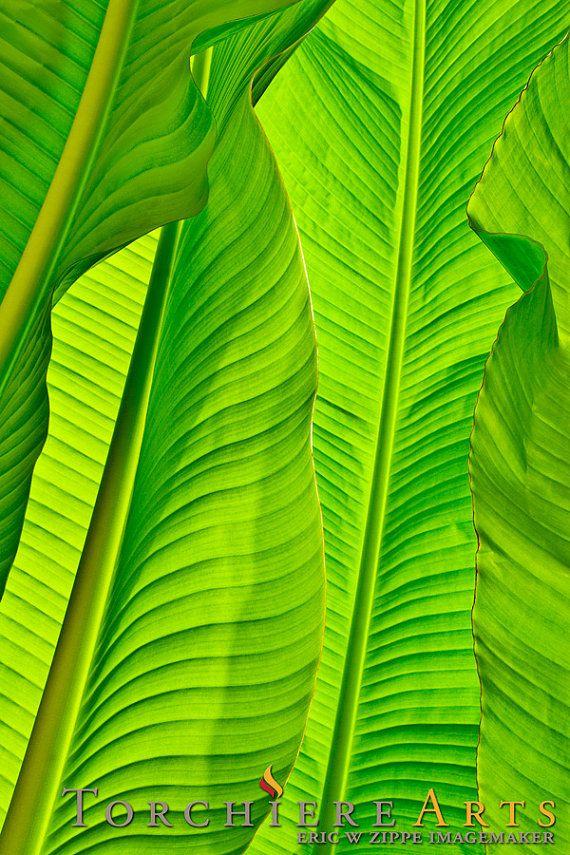Banana Leaves Photography, Tropical Photo, Tropical Decor, Tropical Photograph, Green Art, Tropical Wall Art, Tropical Leaves, Leaf Art 8x12