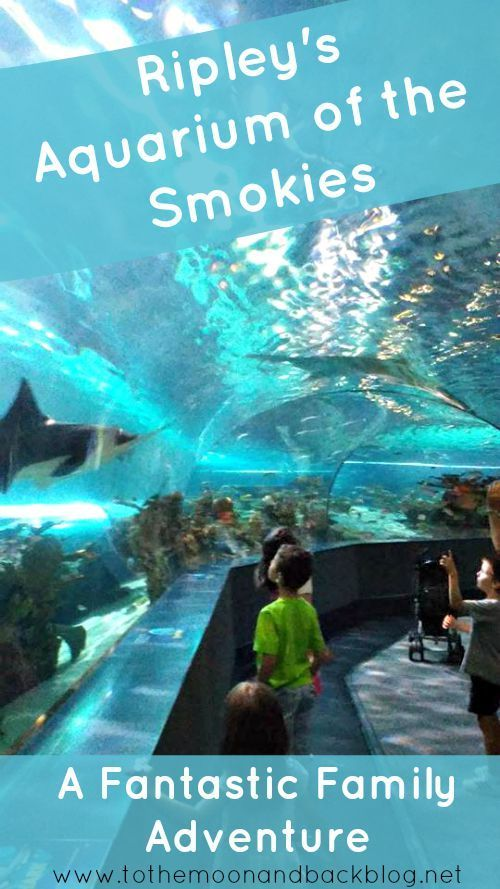 Take A Virtual Trip Through Ripley 39 S Aquarium Of The