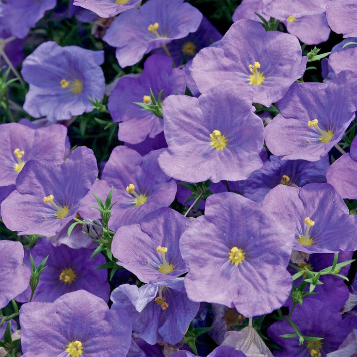 12 Best Annual Flowers For A Sunny Site