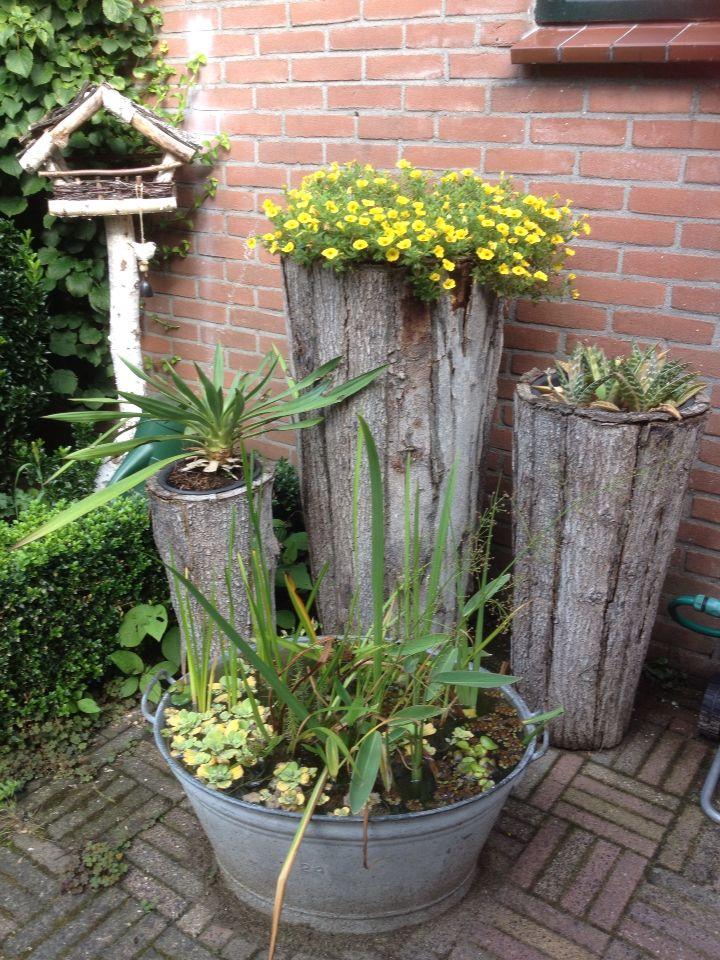 Teil met waterplanten