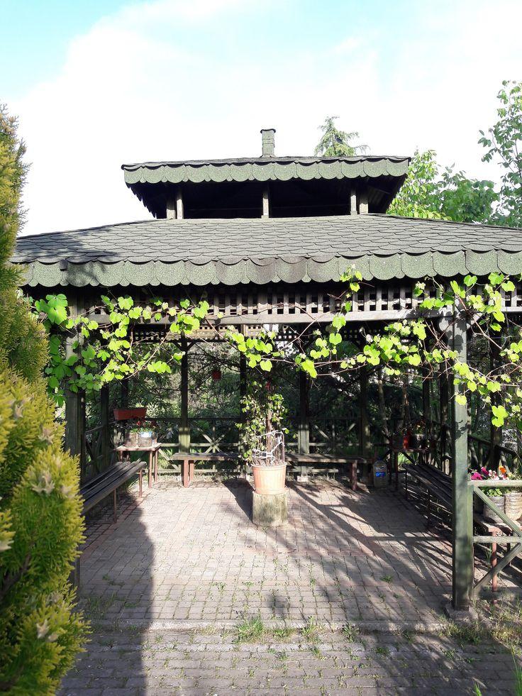 https://flic.kr/p/TUpsTJ | Ivy and Foliage