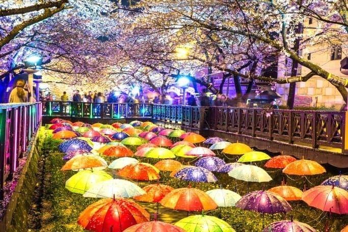 Jinhae Cherry Blossom Festival 2020 One Day Tour From Seoul Busan Daegu Cherry Blossom Festival One Day Tour Cities In Korea