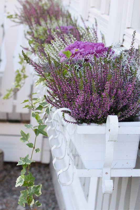 till hösten: ljung, murgröna och prydnadskål