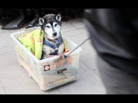Watch the beautiful video here. | One Man's Devotion To His Dog Will Make You Cry