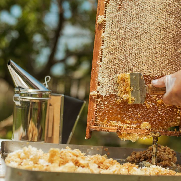 Harvest Your Honey - Podcast in 2020 | Bee keeping ...
