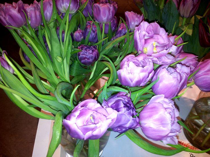 Double price tulips