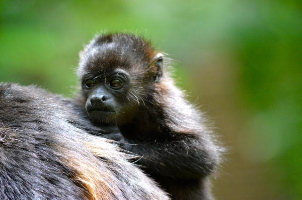 essay on wildlife for kids