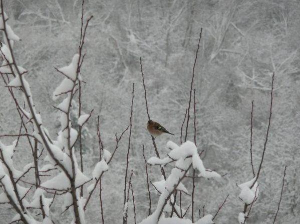 Υπέροχο χειμωνιάτικο τοπίο στο Γρανίτη στη διαδρομή από την πόλη της Δράμας προς το Κάτω Νευροκόπι! http://diakopes.in.gr/trip-ideas/article/?aid=208621 #travel #greece #mountain #drama #snow #winter