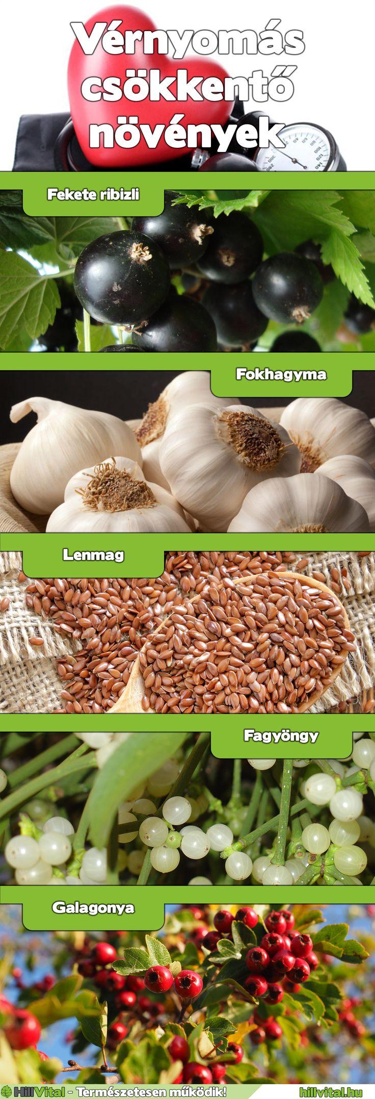 Gyógynövények, melyek segítenek a magas vérnyomás..