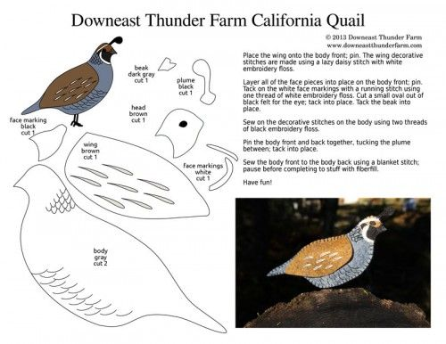California quail free download pattern