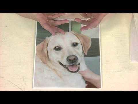Quilting Arts Workshop - Pet Picture Quilts Made Easy: Fabric Collage Techniques - Faith Cleary