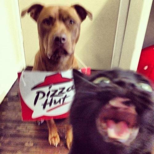 ERMAHGERD PIZZA HUT!!! #cats #meme