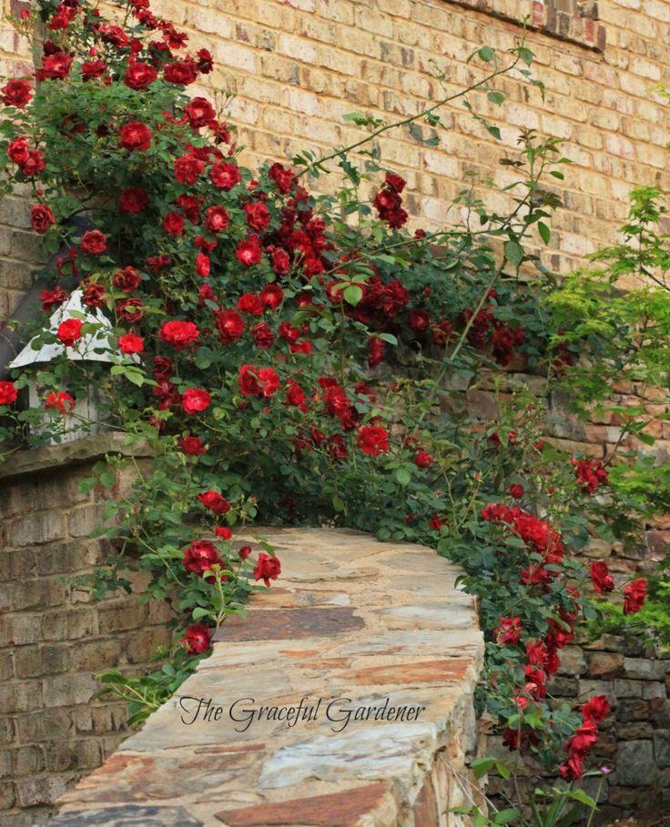 "Brenda Addington Of The Graceful Garden Shares Her ""Moo"