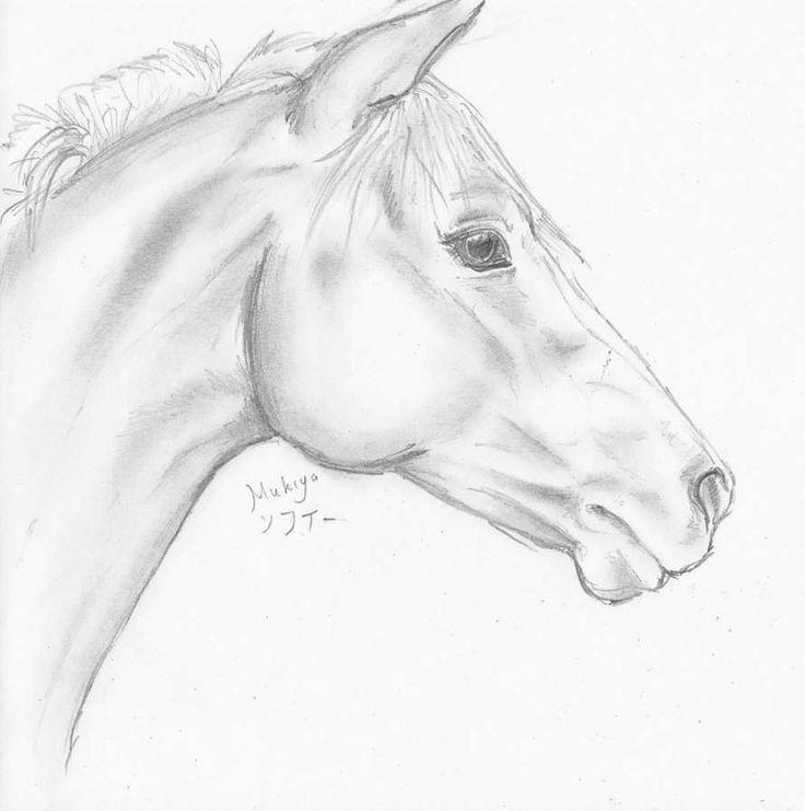 Horses Pferde Kopf Zeichnen Pferde Zeichnen Und