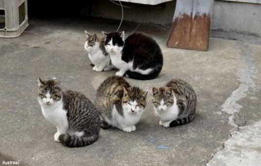 Cara Mengobati Kucing yang Terkena Scabies Secara Alami (AMPUH)