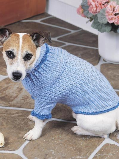 Canine Comfort Dog Sweater | Crochet  - Free pattern  ~This dog doesn't look too impressed, but at least the coat looks warm! ~