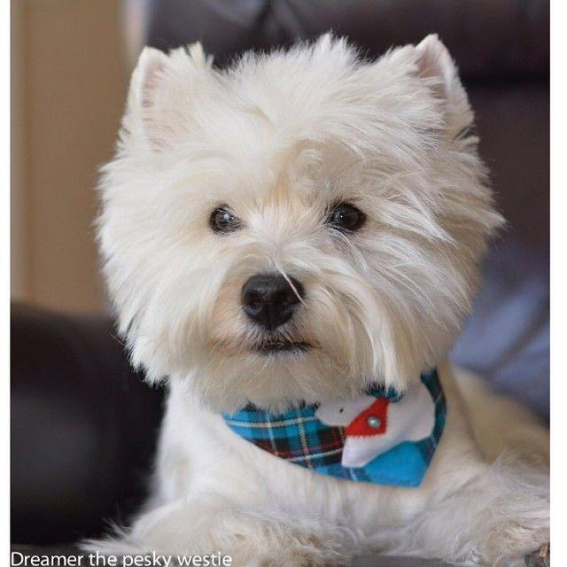 perrito supermono blanco