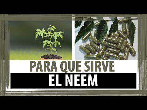 PARA QUE SIRVE EL NEEM | PROPIEDADES DEL NEEM - YouTube