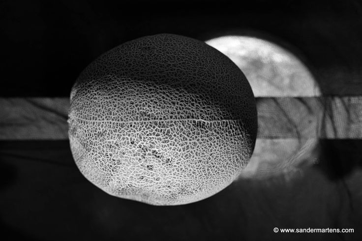 "From the series ""Form over Function: Galia melon"