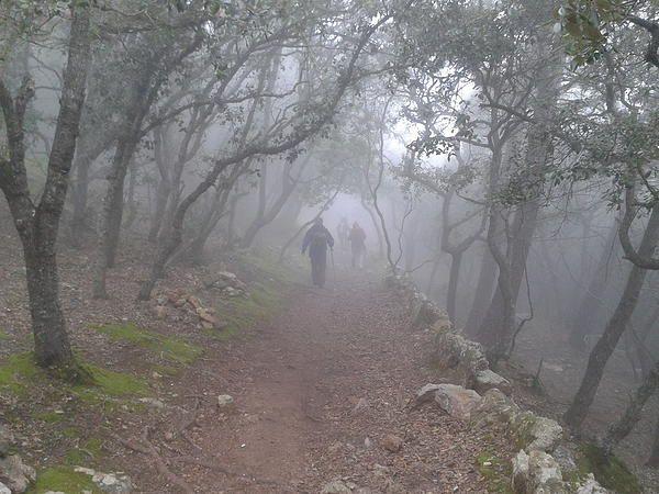 camp puravida mallorca | The Program